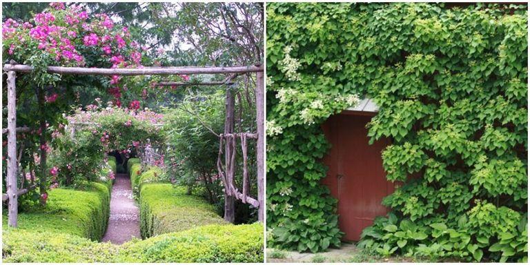 Gardens - Secret Garden Ideas