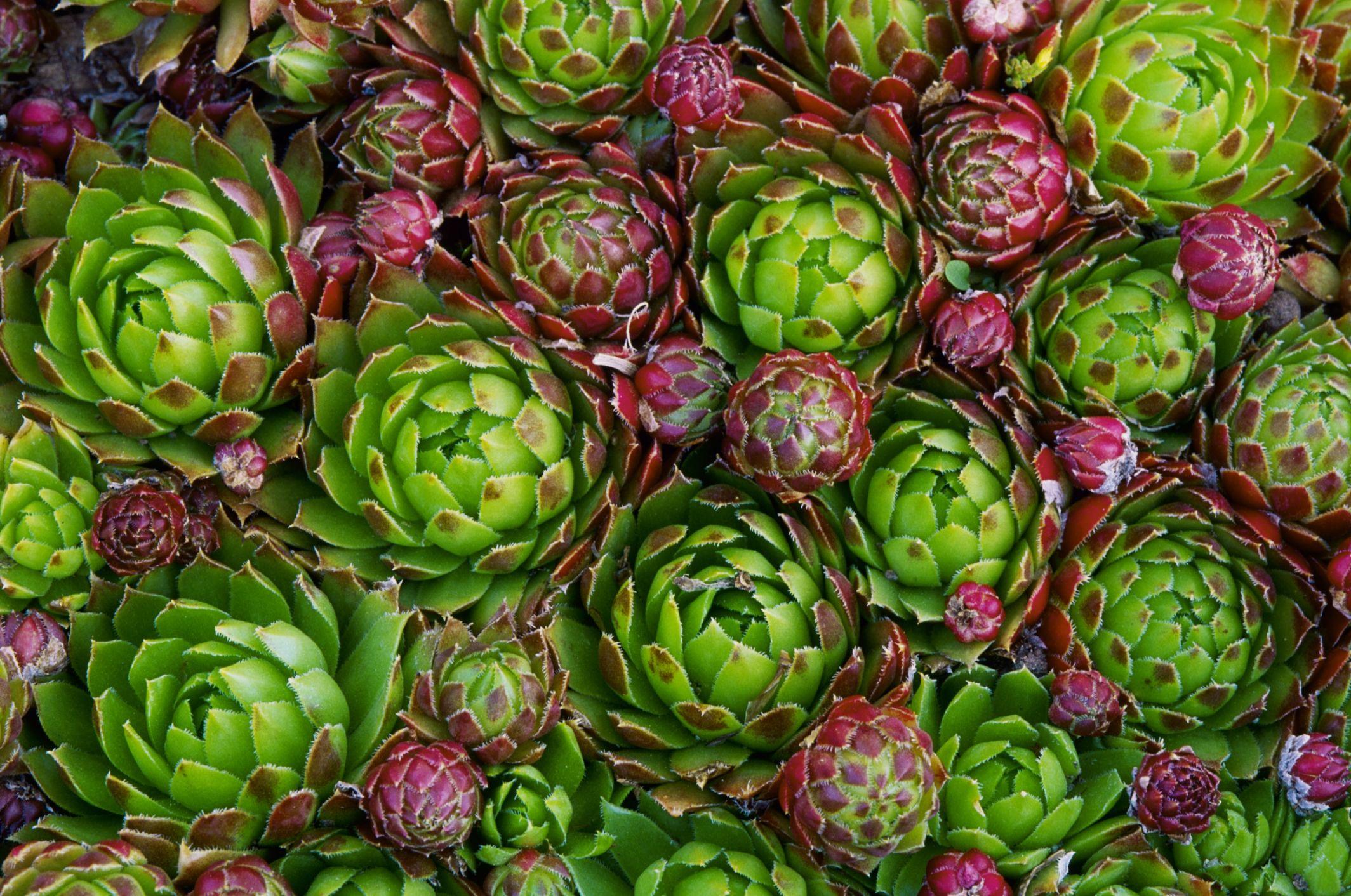 8 Funny Plant Names - Plants With Odd Nicknames