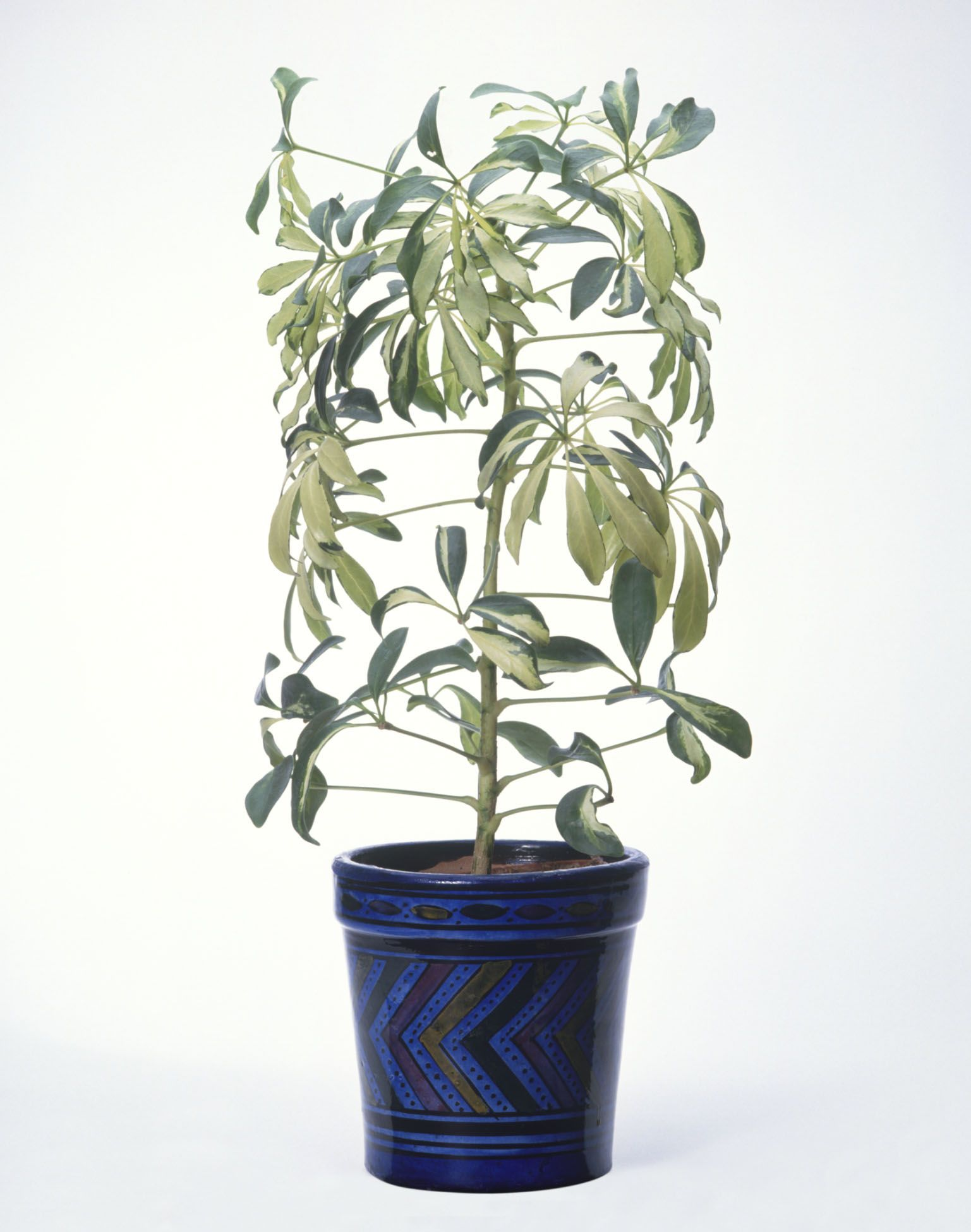 Things Your Plant Leaves Are Trying to Tell You - Plant Leaf Conditions