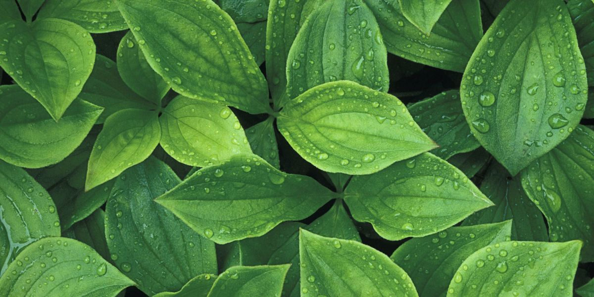 Things Your Plant Leaves Are Trying to Tell You - Plant ...