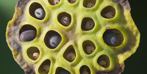 Trypophobia The Fear Of Holes