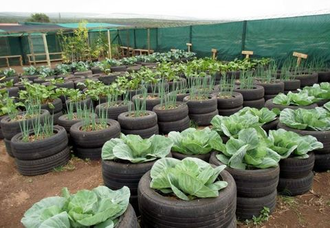 tire vegetable garden