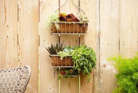 Plant, Wall, Flowerpot, Houseplant, Flower Arranging, Floral design, Herb, Floristry, Annual plant, Still life photography,