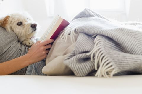 reading in bed with dog