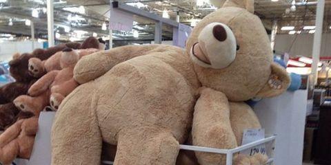Textile, Stuffed toy, Toy, Plush, Terrestrial animal, Beige, Fur, Snout, Baby toys, Teddy bear,