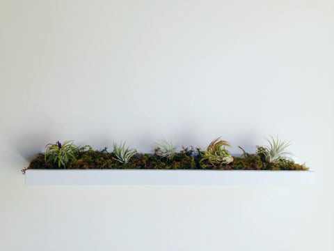 "<p>How lovely is this floating garden? Since air plants aren't watered in the traditional matter (you can mist them or give them a dunk in a bowl of water every so often) you don't have to worry about water seeping out of the sides.</p><p><a href=""http://hotforhouses.com/2014/04/27/weekend-whimsy-ikea-hack-for-air-plants/"" target=""_blank""><em>See more at Hot For Houses »</em></a></p>"