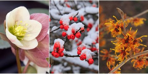 Branch, Petal, Red, Flower, Winter, Twig, Colorfulness, Freezing, Spring, Flowering plant,