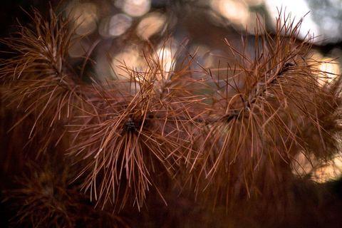 Brown, Terrestrial plant, Natural material,