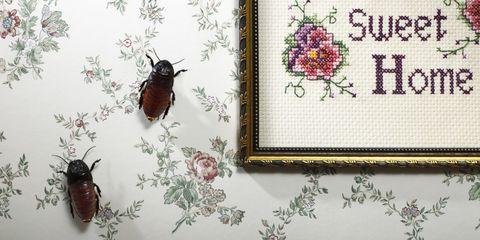 Bugs on Wallpaper