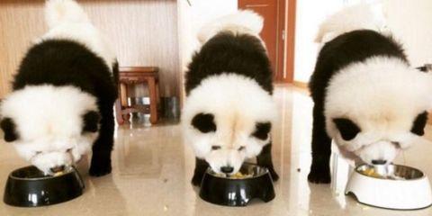 Vertebrate, Snout, Carnivore, Dog, Black, Terrestrial animal, Fur, Canidae, Bowl, Serveware,