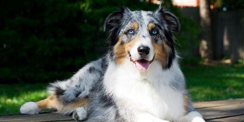 40 Top Medium Sized Dogs