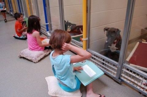 Humane Society of Missouri