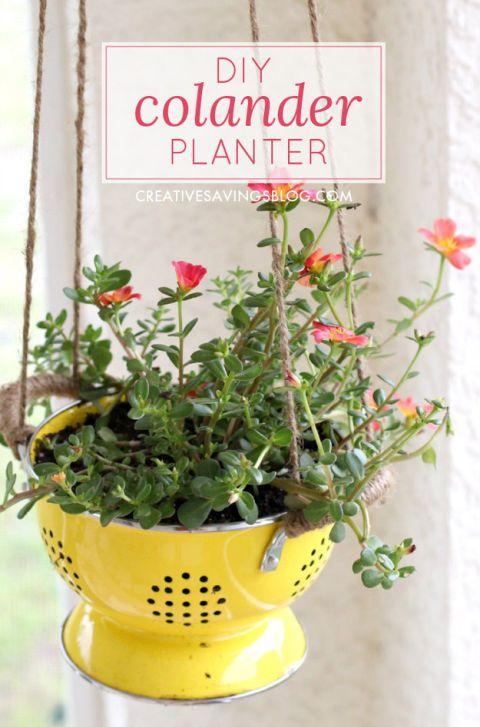 Petal, Flower, Flowerpot, Flowering plant, Interior design, Annual plant, Plant stem, Herbaceous plant, Coquelicot, Pedicel,