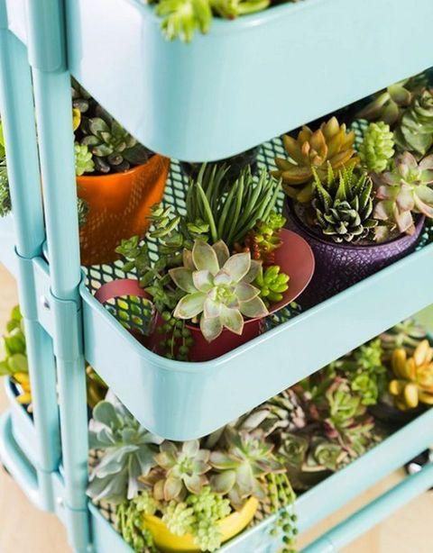 Flowerpot, Terrestrial plant, Succulent plant, Vegan nutrition, Peach, Whole food, Houseplant, Stonecrop family, Annual plant, Echeveria,