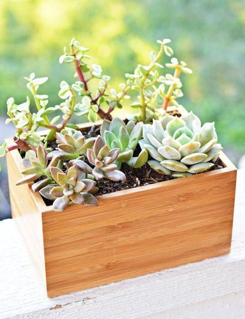 Flowerpot, Interior design, Succulent plant, Houseplant, Pachyphytum, Stonecrop family, Echeveria, Plywood, Gravel, Pottery,