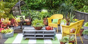 container gardening, potted plants