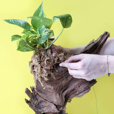 DIY Driftwood Planter