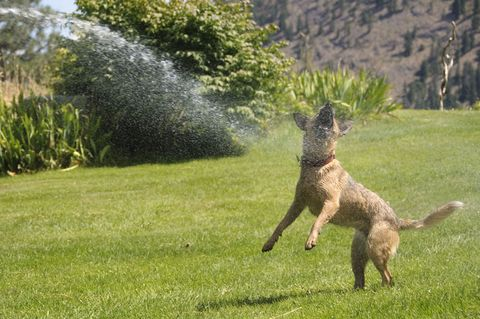 dog getting hosed down in the park