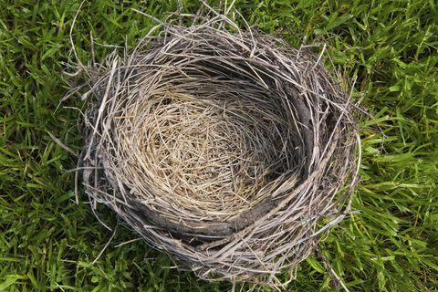 Empty Nest Advice — Empty Nest Syndrome Tips and Solutions