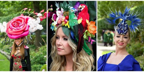 Nose, Parrot, Blue, Petal, Hair accessory, Pink, Macaw, Style, Headgear, Beauty,
