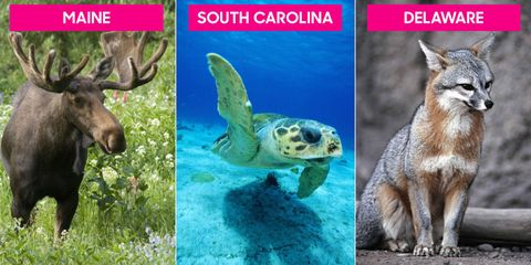 State Animals - State Mammals, Birds and Reptiles