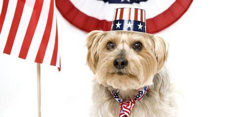 patriotic dog 2
