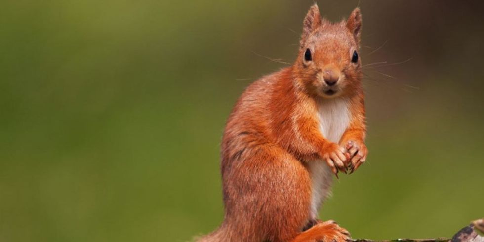 Squirrel Steals GoPro, Makes Greatest Film of Our Time