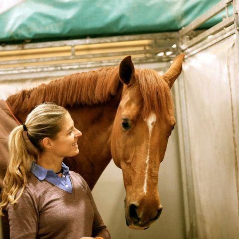 Human, Brown, Horse, Vertebrate, Horse supplies, Mammal, Sorrel, Jaw, Organ, Working animal,