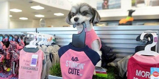 PetSmart Introduces Pet Spa Prototype Store