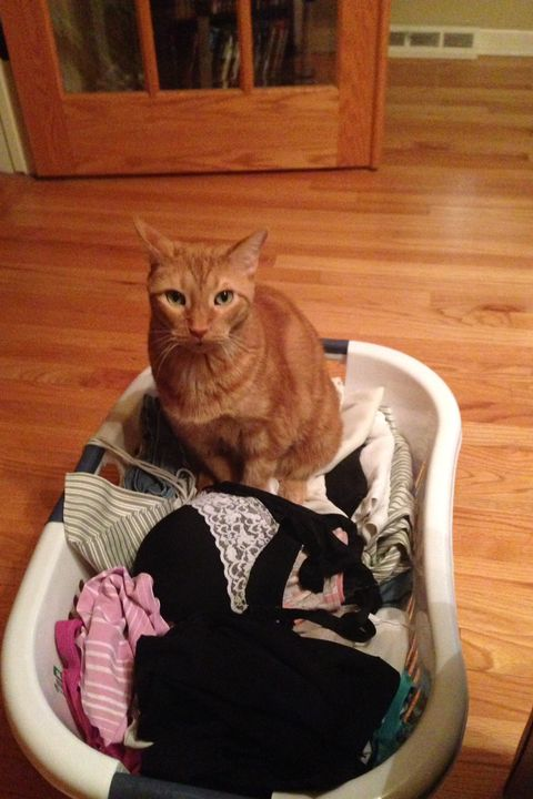 Cat Disasters