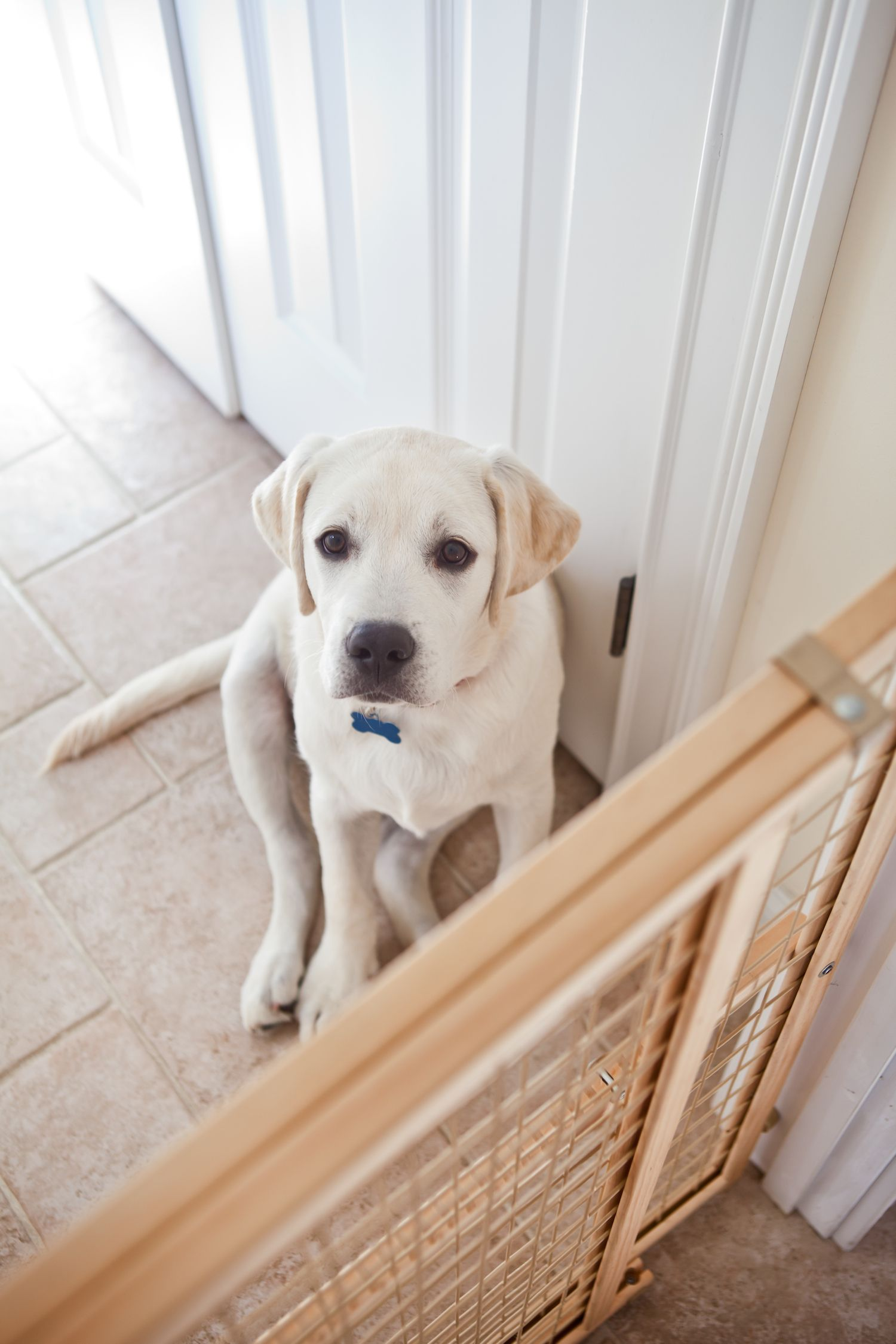 Repurpose that safety gate tokeep your overly excitable dog from jumping on Mom as she grabs a snack.