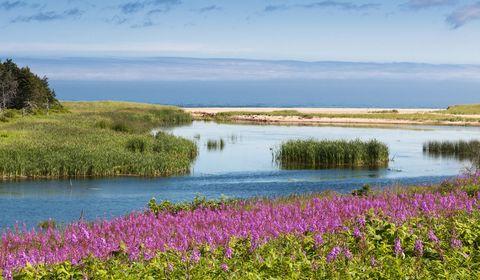Body of water, Nature, Natural environment, Plant, Natural landscape, Water resources, Landscape, Wetland, Marsh, Bank,