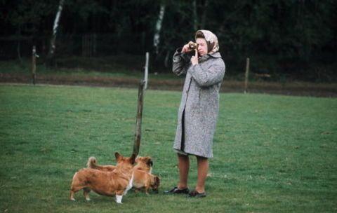 Human, Dog breed, Dog, Mammal, Carnivore, Companion dog, Fawn, Sporting Group, Fur, Canidae,