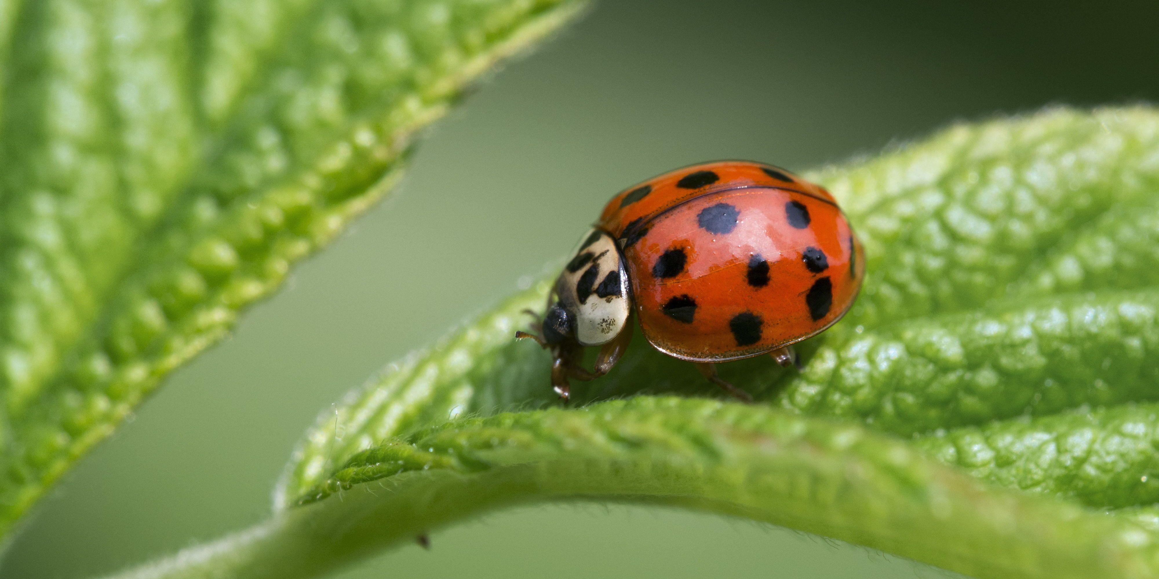 Asian bug get lady rid