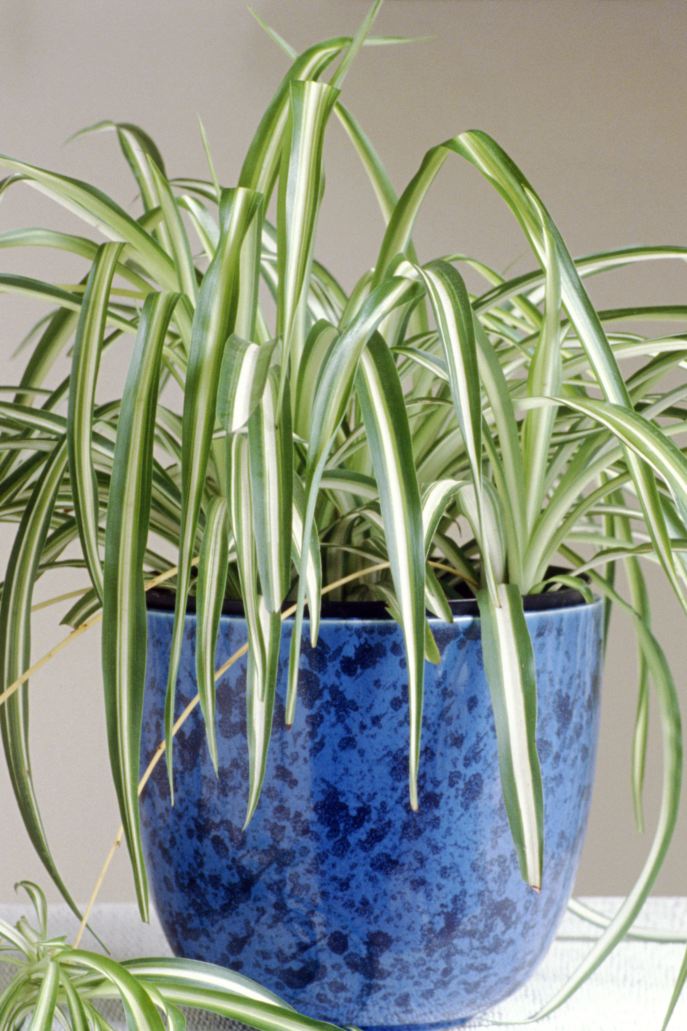 25 Easy Houseplants To Care For Indoor Plants Love Potted Decorative
