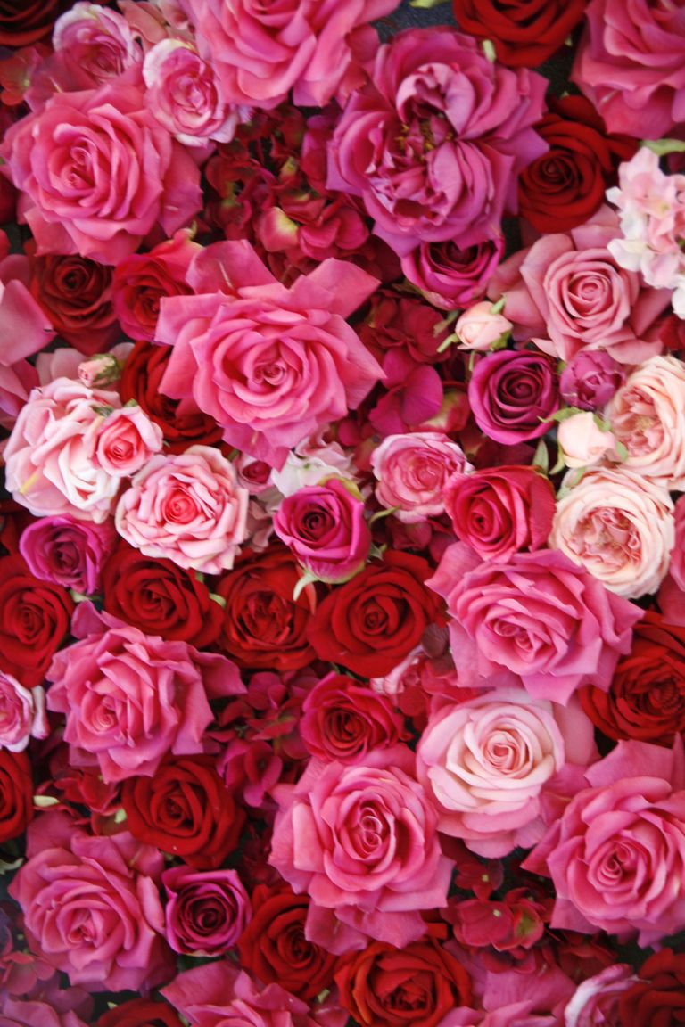14 Rose Color Meanings - What Do the Colors of Roses Mean ...