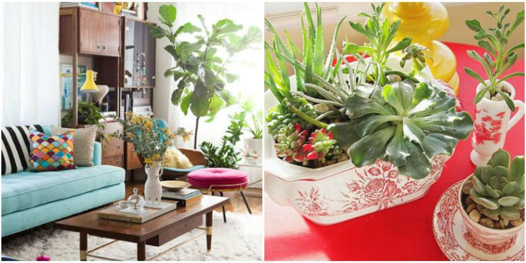 how to decorate with houseplants best houseplant decor rh goodhousekeeping com Plants Living Room Shelf Ideas Living Room Shelves and Cabinets