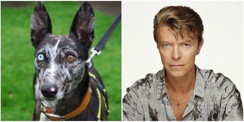 Dog breed, Forehead, Collar, Eyebrow, Dress shirt, Shirt, Vertebrate, Dog, Collar, Mammal,