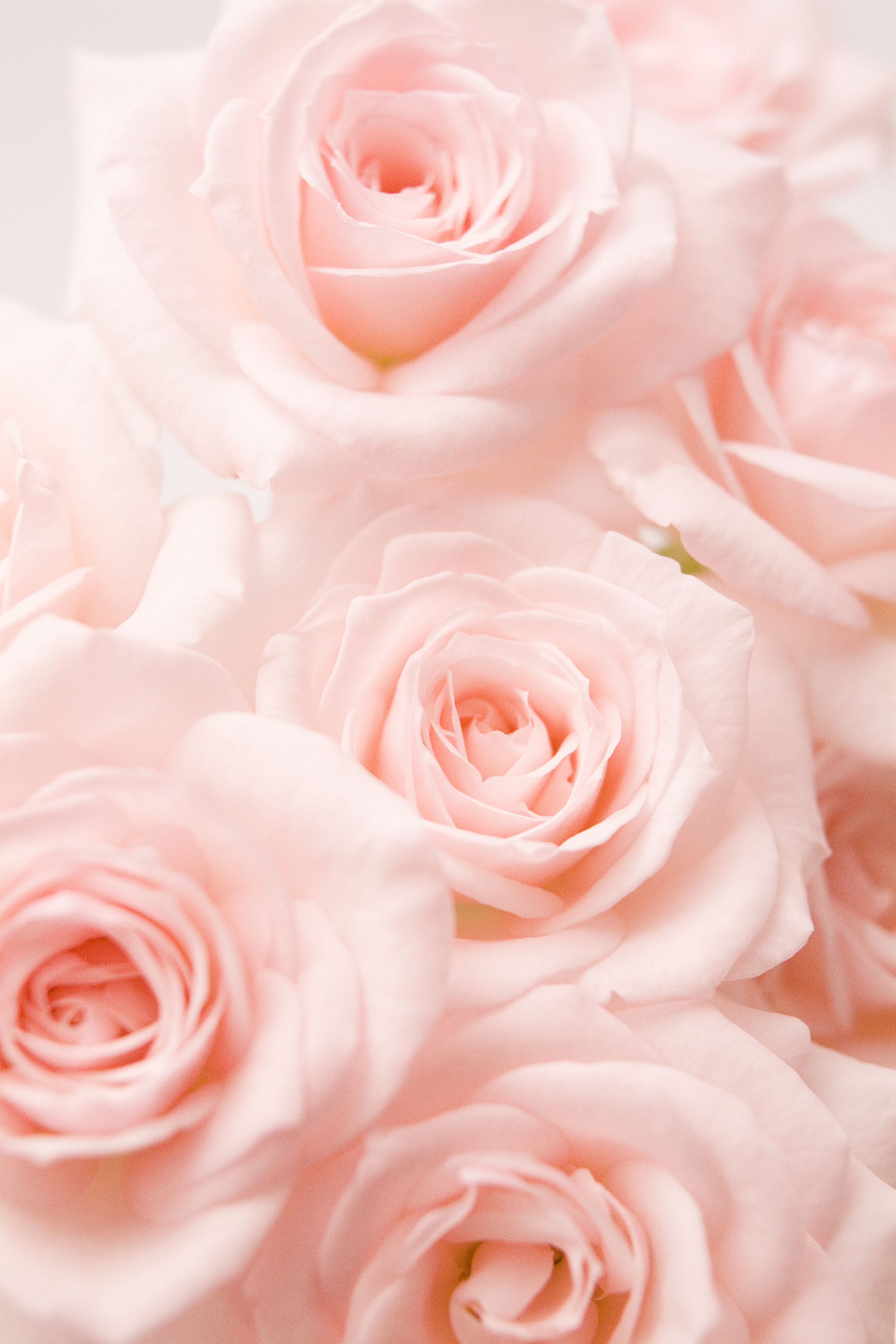 14 rose color meanings what do the colors of roses mean for 14 rose color meanings what do the colors of roses mean for valentines day mightylinksfo