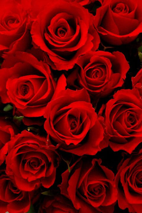 image. Getty Images. Red Roses