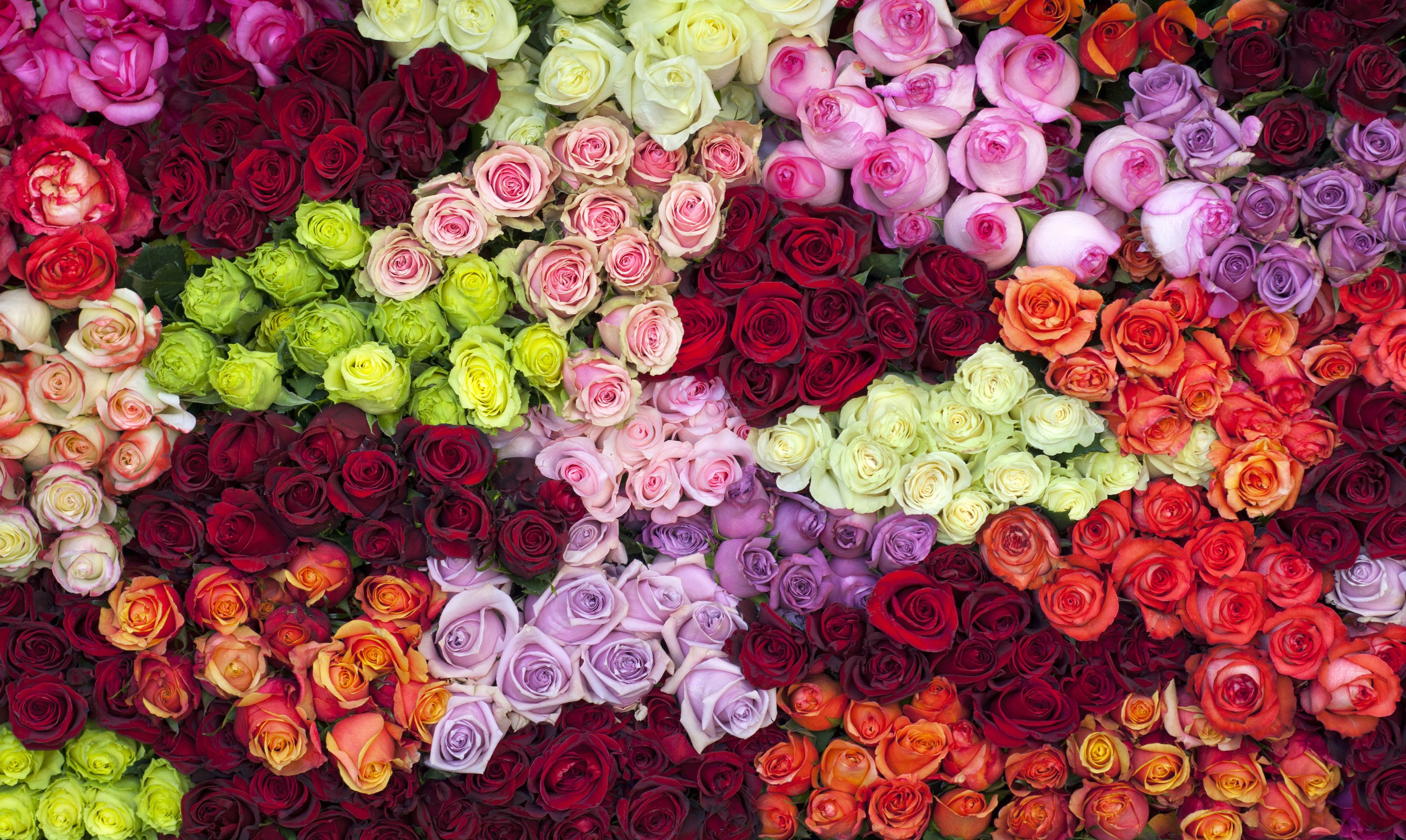 14 Rose Color Meanings - What Do the Colors of Roses Mean for ...