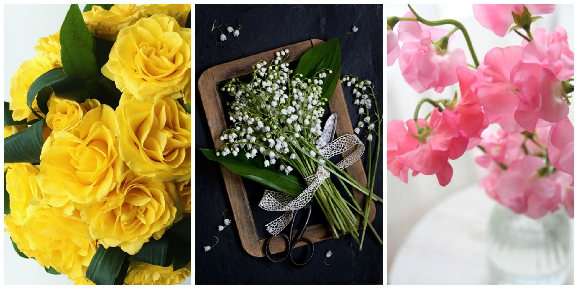 41 flowers with surprising meanings meanings of flowers izmirmasajfo
