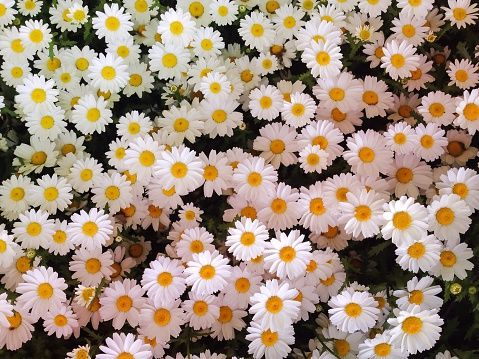 41 Flowers With Surprising Meanings