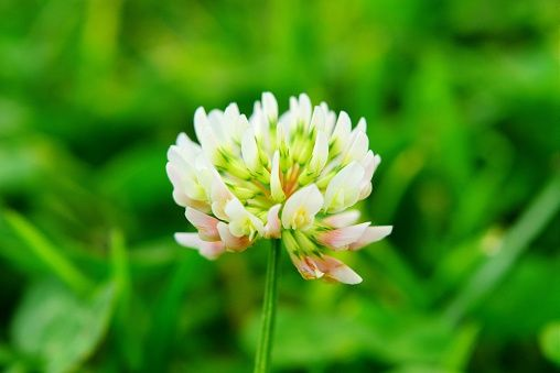 41 flowers with surprising meanings meanings of flowers mightylinksfo Image collections