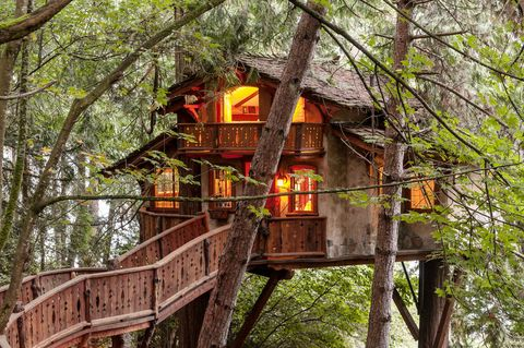 Wood, Branch, Tree, Twig, Woody plant, Tree house, House, Biome, Forest, Rural area,