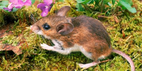 Organism, Grass, Skin, Rodent, Adaptation, Terrestrial animal, Snout, Groundcover, Fawn, Grass family,