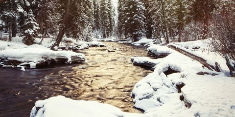 Snow, Winter, Nature, Natural landscape, Tree, Water, Wilderness, Stream, Freezing, Natural environment,