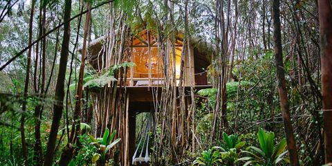 Jungle, Natural environment, Vegetation, Rainforest, Tree, Forest, Tree house, Nature reserve, Old-growth forest, House,
