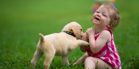 pregnant-women-with-dogs-have-healthier-babies