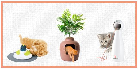 Cat, Flowerpot, Felidae, Small to medium-sized cats, Houseplant, Whiskers, Plant, Tail, Illustration,